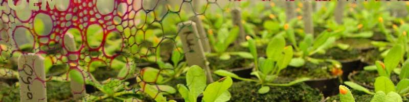 Plant Physiology NEET 2020