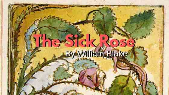 MCQ from The Sick Rose by William Blake | Class 11 English Poetry | WBCHSE